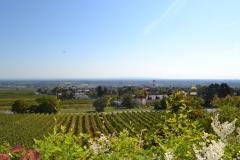 Aussicht Wiener Becken